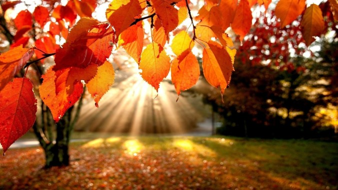 sunlit-autumn-leaves-4187